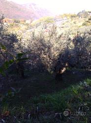 Terreno agricolo mq 1050 Genazzano