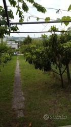 Terreno agricolo Camerano