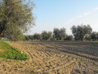 Pescia Romana. Terreno agricolo edificabile