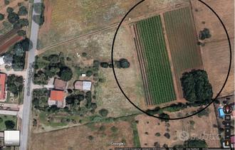 Terreno agricolo Anzio (loc. Sacida)