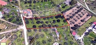 Terreno Agricolo 2500 mq con ulivi