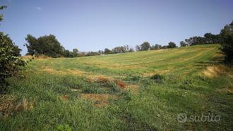 Terreno agricolo 3,5 ha con pozzo