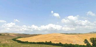 Azienda agricola 110 ha Pisa