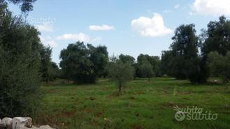 Terreno con alberi di ulivo