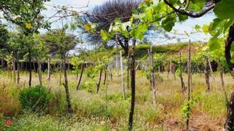 Terreno agricolo con depositi contadini
