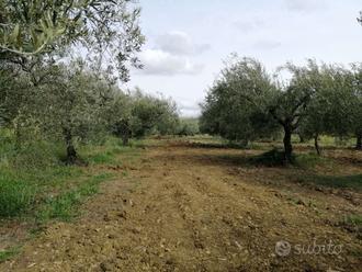 Terreno Agricolo a Paternò 4000 mq
