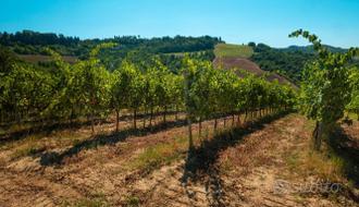 Firenze, azienda agricola 118 ettari,con caseggiat