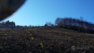 Terreno a Maiolati Spontini