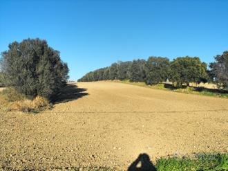 Terreno agricolo con uliveto e cubatura