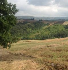 26 ettari terreni tra Arezzo e Anghiari