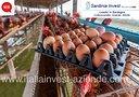 azienda-avicola-produzione-distribuzione
