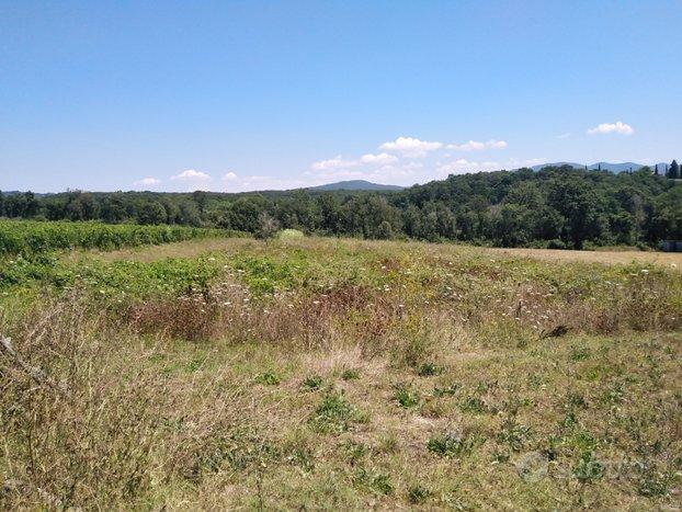Terreno panoramico a Bibbona per frutteto o svago