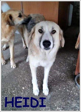 Heidi, 1/2 anni 18 kg salvata in strada in Albania