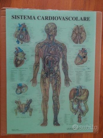Anatomia corpo umano