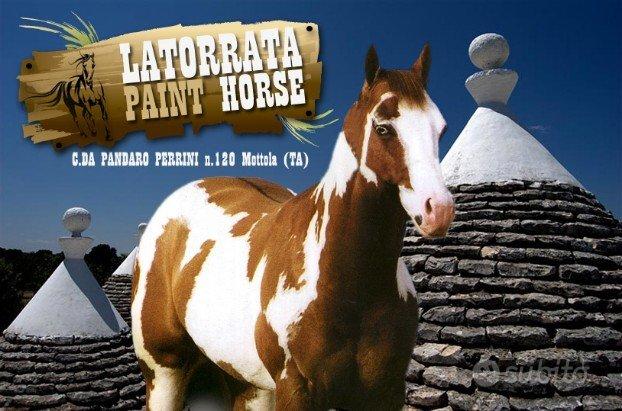 Puledri Paint Horse