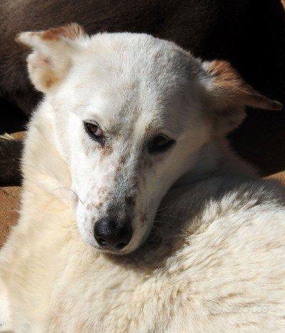 Betty, cagnolona di strada triste e buona