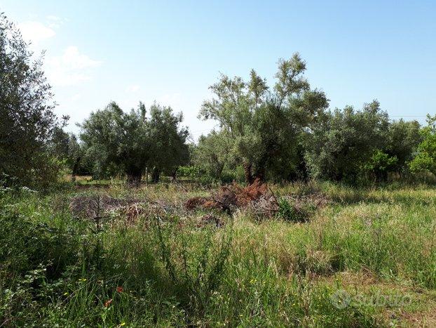 Terreno edificabile residenziale a Pastorano
