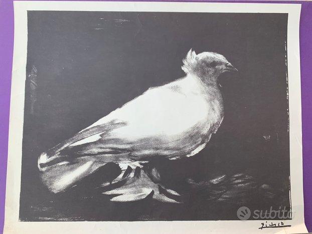 Stampa Pablo Picasso - Colomba