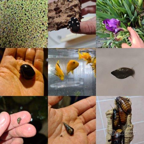 Varie specie di piante, pesci, lumache e insetti