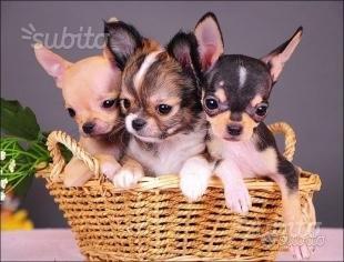 I piccolini nel cestino