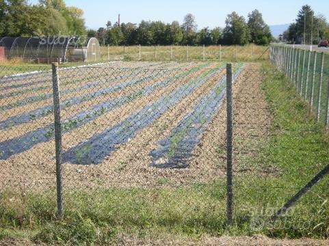 Vendita terreno agricolo con strutture x vivaismo