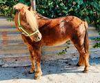 Pony femmina 5 anni per bambini