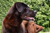 Adozione Chico cucciolone in canile