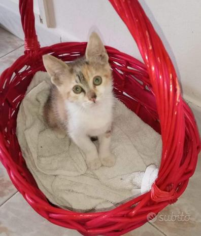 Gattina in adozione