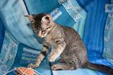 Una famiglia per Gegè.affettuoso gattino