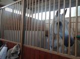 Box liberi per cavalli
