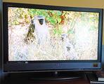 """TV LCD SONY 40"""" Full HD 1080p KDL-40W2000"""