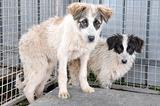 ADOTTA Alec Jace cagnolini cuccioli di 4 mesi