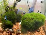 Neocaridine e lumache acquario dolce