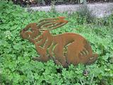 Coniglio rabbit
