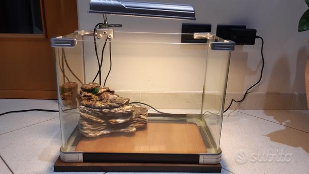 Acquario pesci e tartarughe