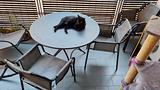 Stupendo tavolo rotondo pieghevole da esterni