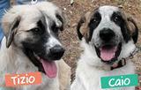 Tizio e Caio cuccioli di 4 mesi