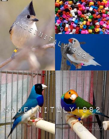 Segnacoppia anellini anelli uccelli