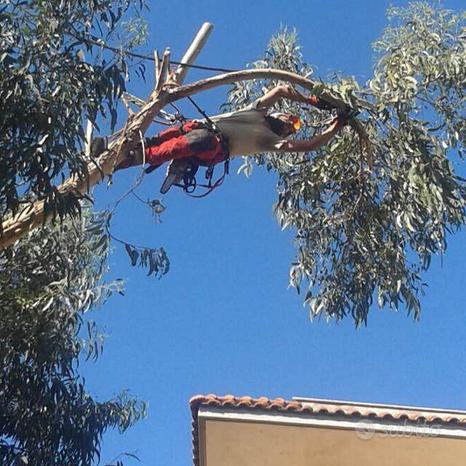 Potatura alberi alto fusto & Giardinaggio