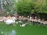 Animali da parco in blocco