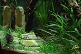 Decorazioni e tane per aquascaping