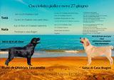 Cuccioli di Labrador Retrievers gialli e neri