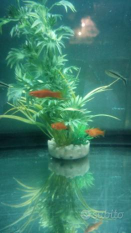 Portaspada pesci acquario