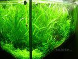Neon T5 per Acquario dolce PHILIPS -OSRAM 24/39/54