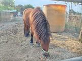 Pony mini