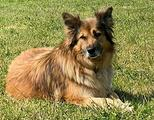 Bionda, una cagnolona da adottare