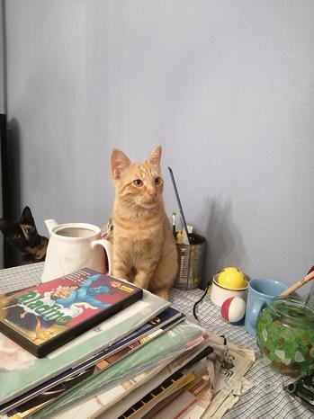 Dolce gattino rosso