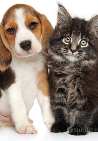 Toelettatrice cani piccola taglia e gatti