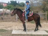 Cavalla super pony