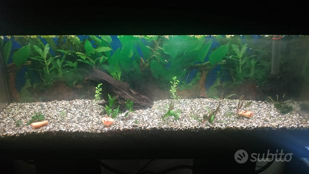 Acquario 100L, filtro esterno, mobiletto nero
